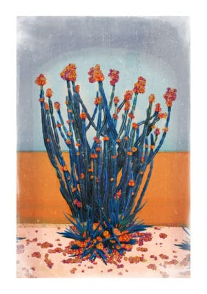 Cactus Wall nadia attura floral landscape giclee print