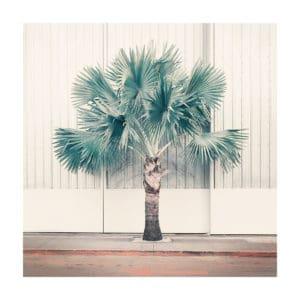 Palm Park nadia attura limited edition giclee print landscape