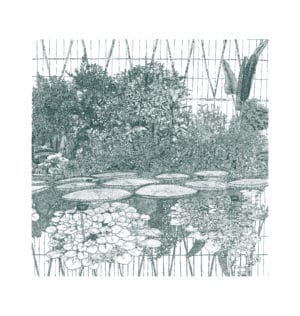 greenhouse waterlily clare halifax limited edition print